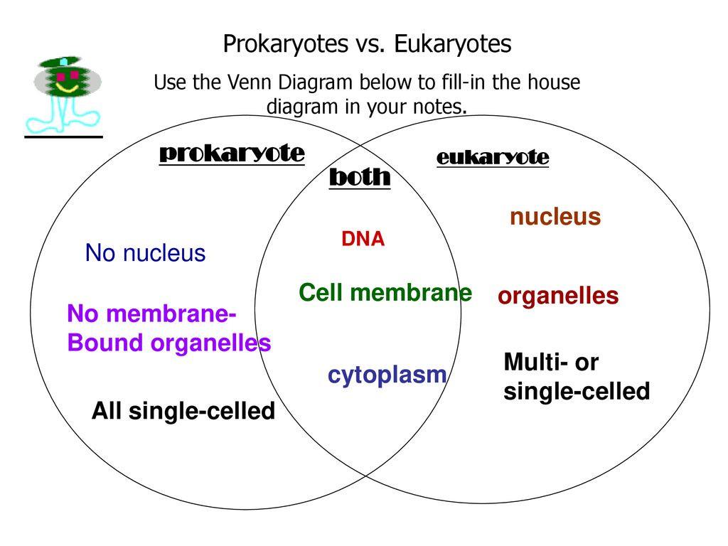 Prokaryote Vs Eukaryote Worksheet