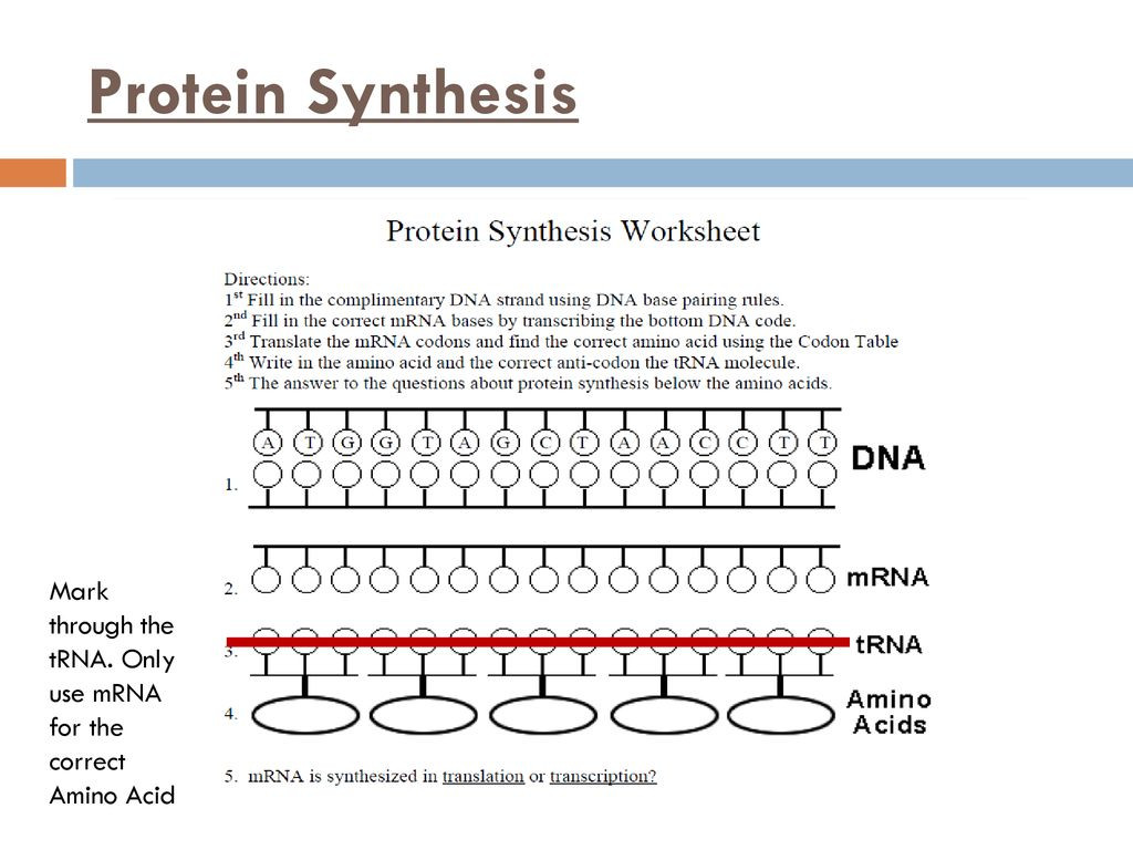 Protein Synthesis Worksheet Answers