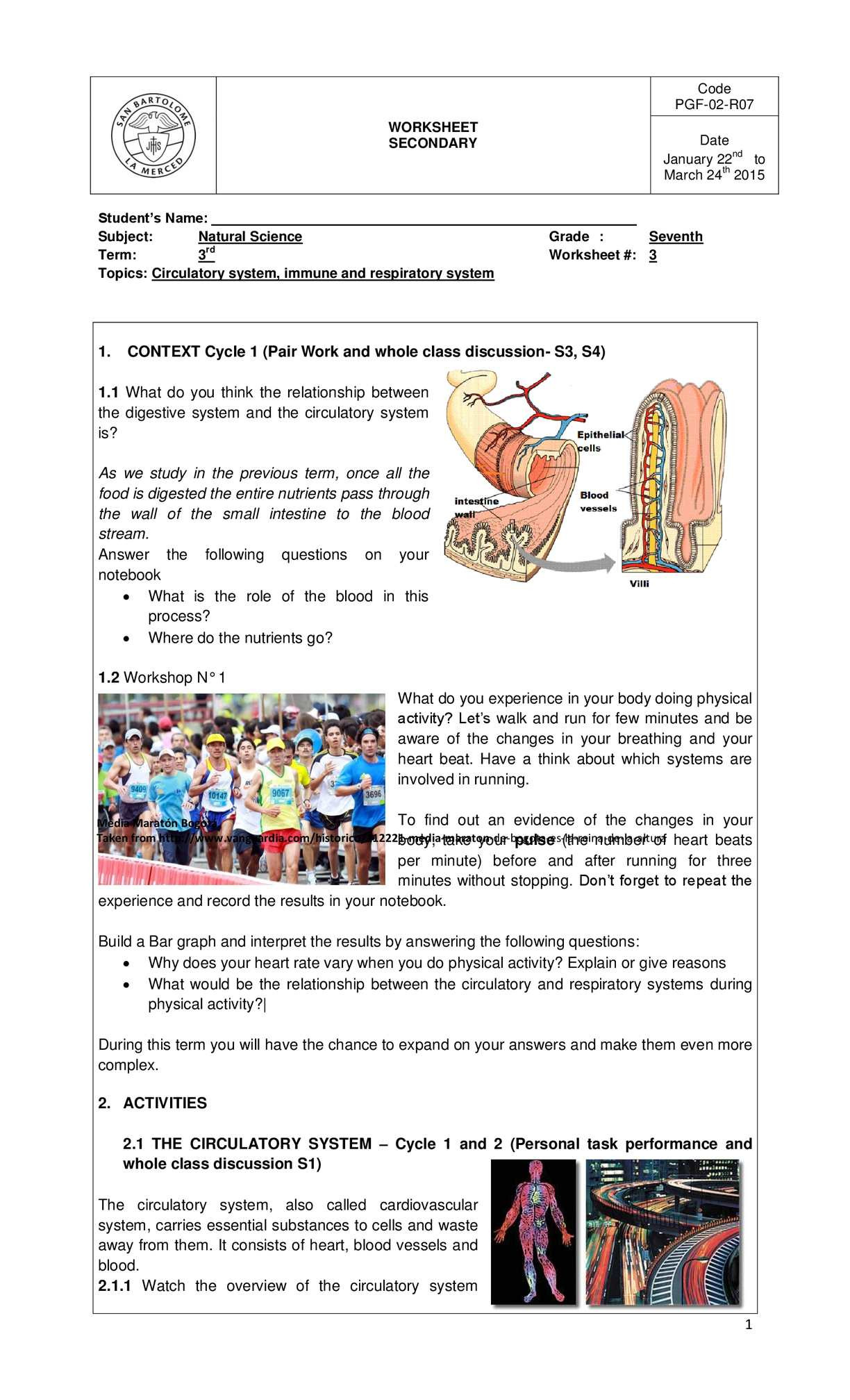 The Circulatory System Worksheet
