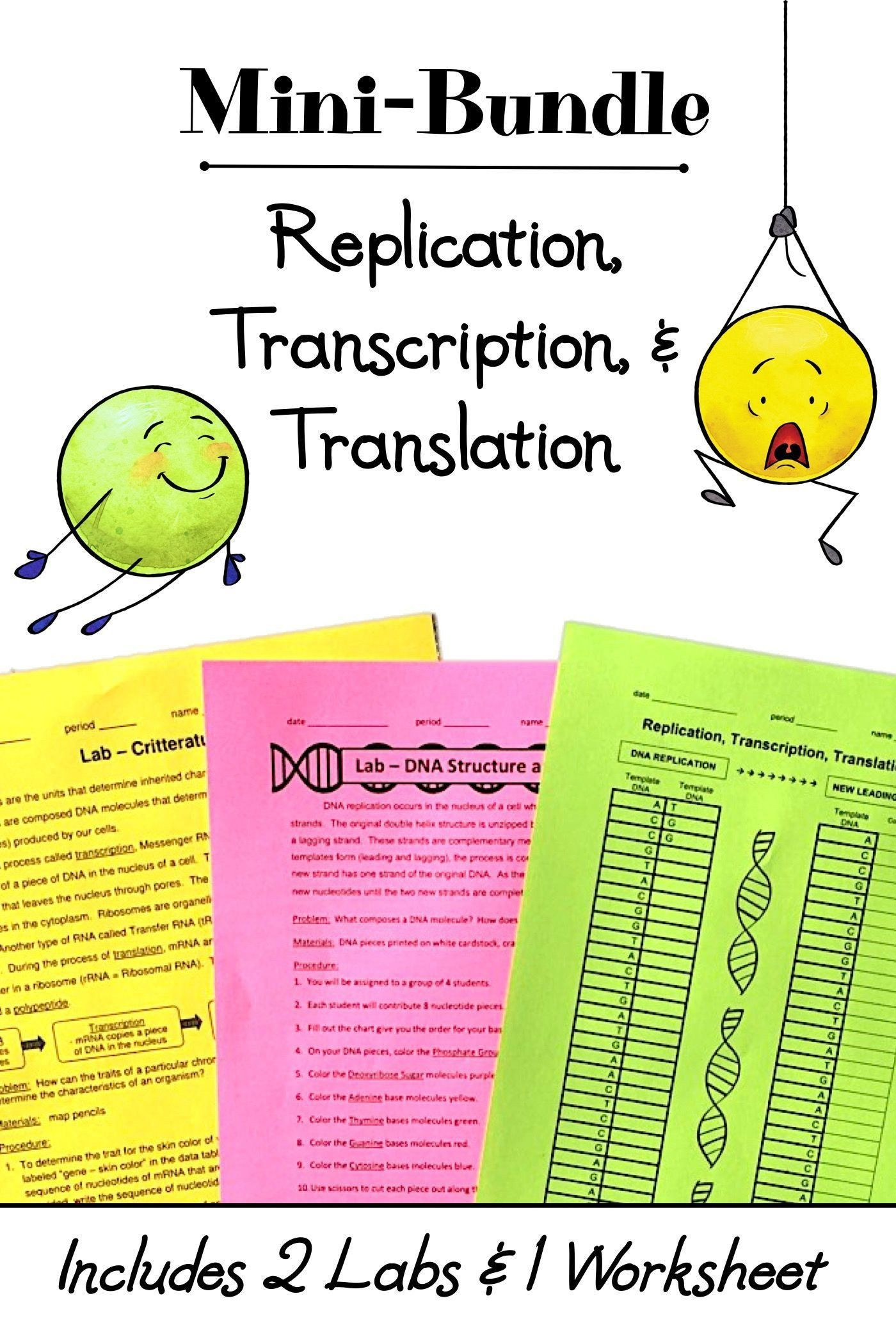 Transcription and Translation Worksheet