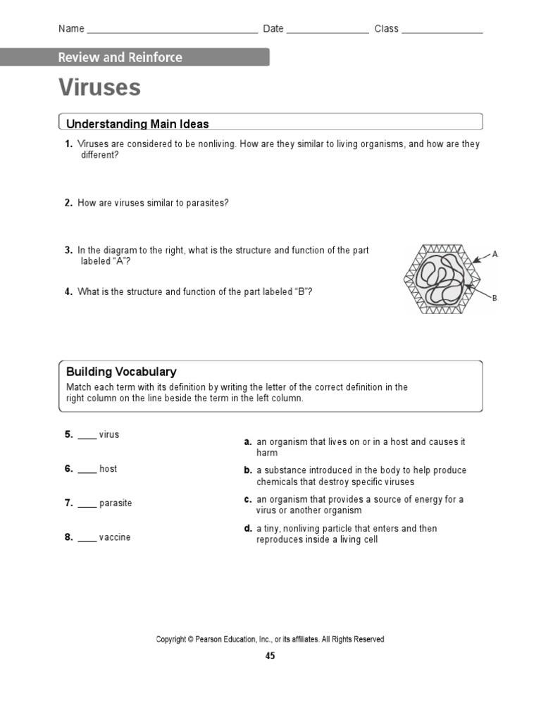 Virus and Bacteria Worksheet
