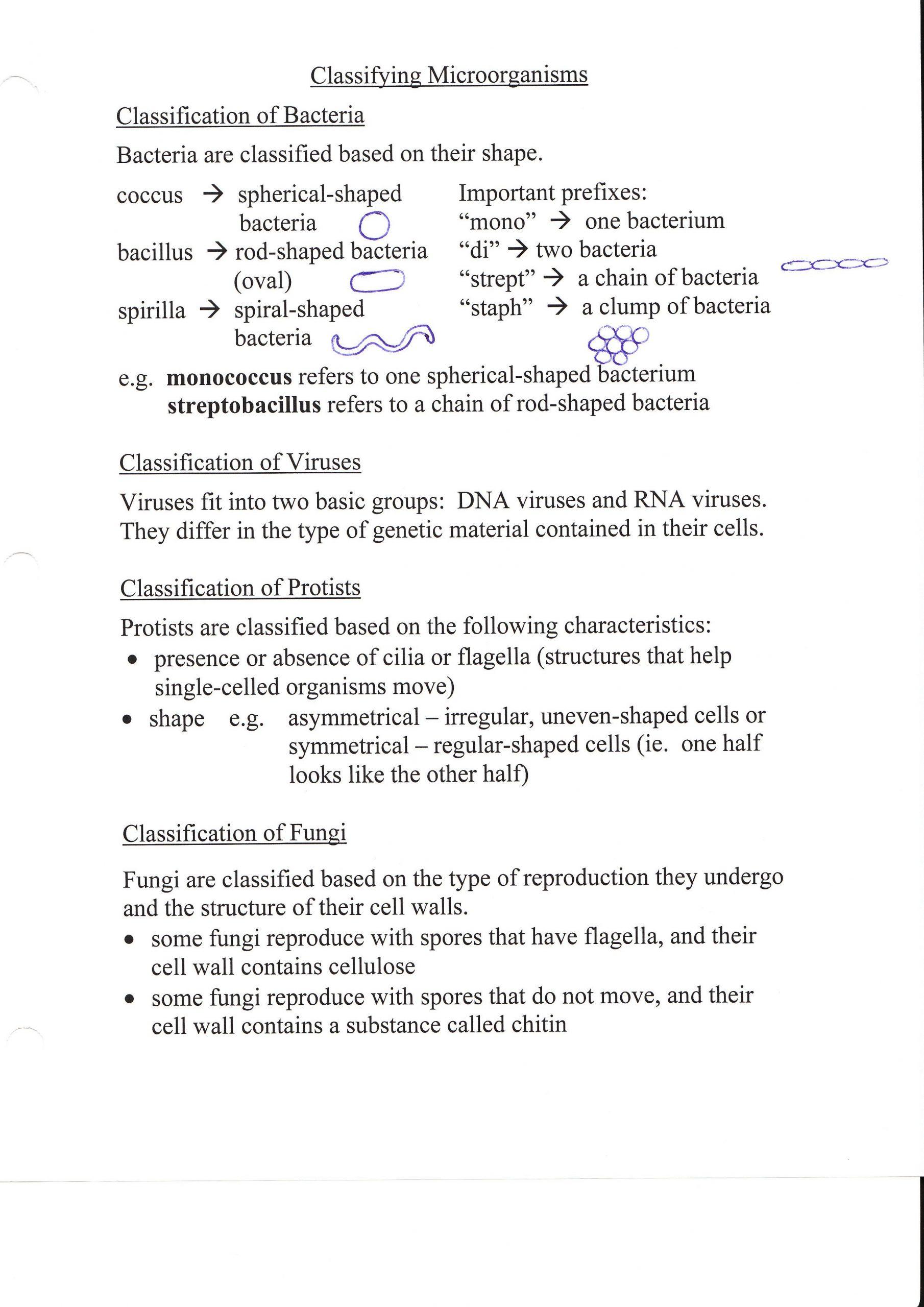 Viruses and Bacteria Worksheet